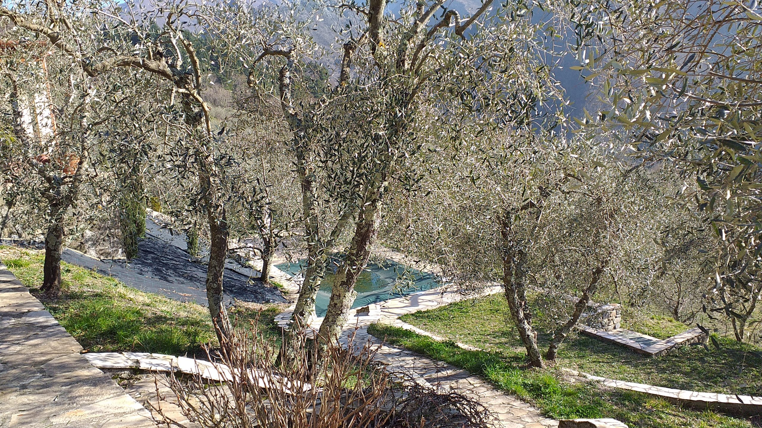 Detached villa with a swimming pool and beautiful olive . ref. 2275
