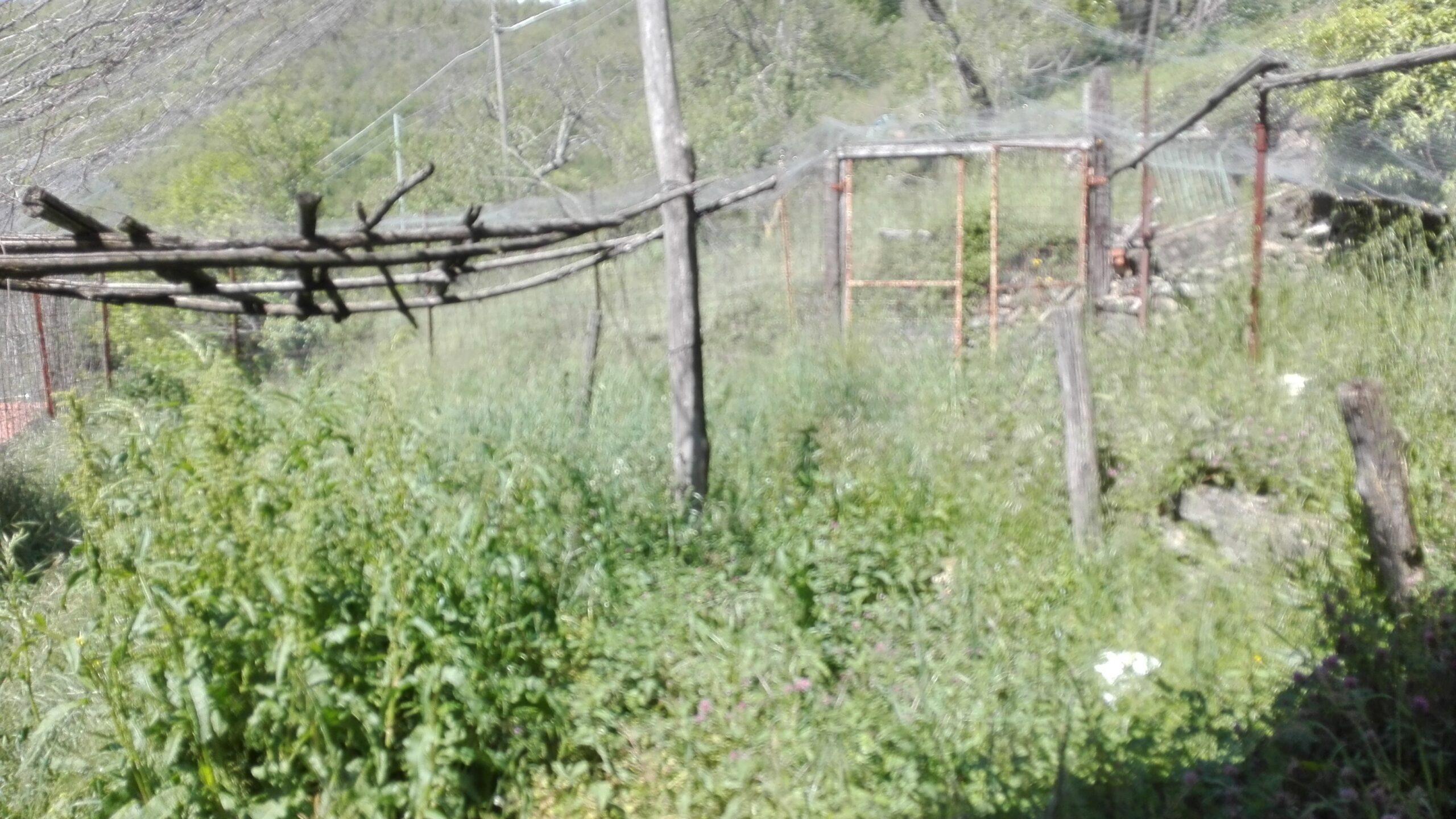 Rustico con giardino ad un prezzo da Favola !!! Vista alpi !!!! Investimento Ref. 2124