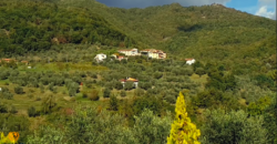 Ancient historic house with new roof, land, olive trees and farmhouses. Dream location in Lunigiana. ref. 2286 THE Tuscany.